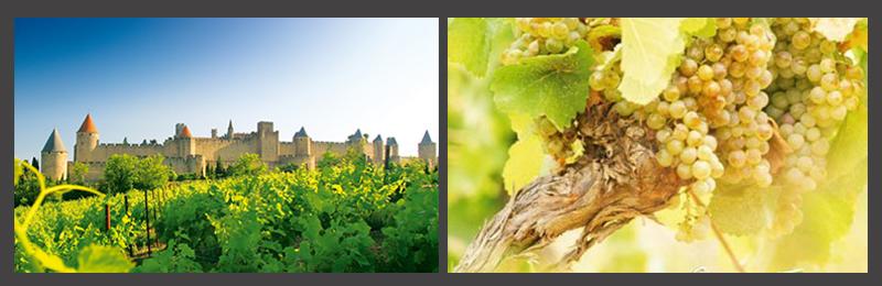 法国朗格多克-鲁西荣出产的葡萄酒不仅丰富多样,而且当地每年超过300天的阳光照射以及特殊的地理环境造就的此地葡萄酒不仅个性强烈,又不失细腻与轻盈。法国著名的大鼻子情圣杰拉尔德-帕尔迪约(Grard Depardieu)也被此地的风土条件所吸引,着手酿造自己的葡萄酒。 由当地热情酒农酿造的葡萄酒非常适合于地中海菜肴的许多基础材料搭配:如橄榄油、蔬菜、海鲜以及奶酪等。在这些佐餐的菜肴搭配中,您可以体验到来自地中海菜肴的健康、美味以及阳光的照拂。