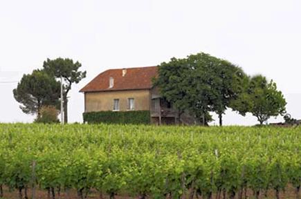葡萄树的平均年龄为34岁左右,种植密度为6000株/公顷.