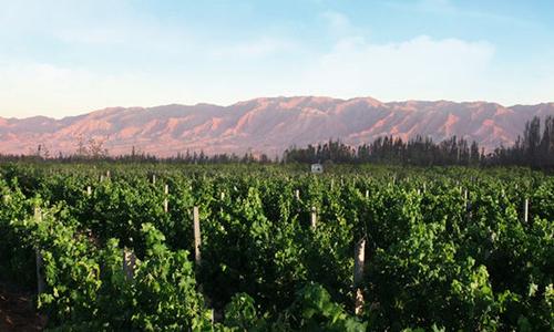 2020年宁夏葡萄酒产区将持续发展