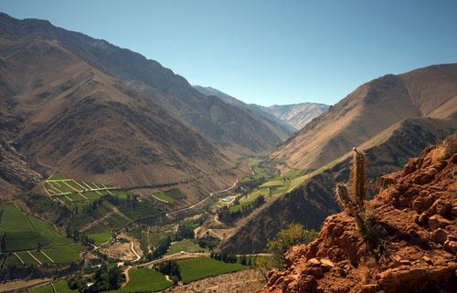 2020年智利葡萄采收季提前结束
