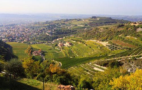 意大利瓦坡里切拉产区