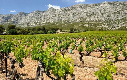普罗旺斯丘(Cotes de Provence)