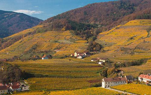 瓦豪(Wachau)成为奥地利第15个DAC产区