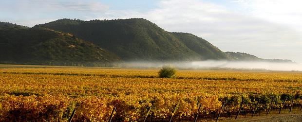 库里科山谷(Curico Valley)