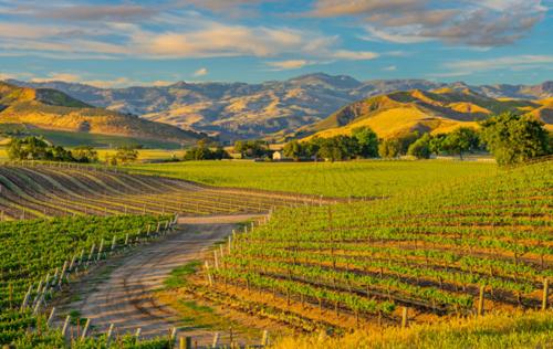 美国加州葡萄种植
