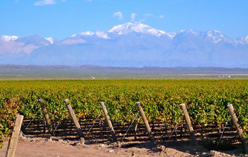 阿根廷葡萄酒产区