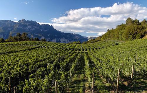 意大利上阿迪杰产区或将划分出86个子产区